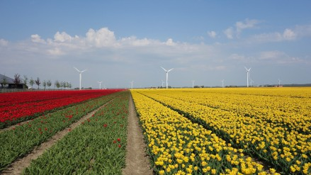 Nieuw groeifonds van 16 miljoen voor Flevolandse MKB'ers